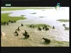 جراد البحر(أحياء في كل مكان)