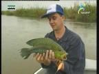 غابات الأمازون (صيادو السمك)