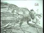 حشرة البق (أحياء في كل مكان)