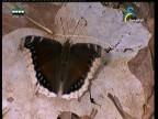 قصة الفراشات