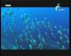 محمية رودان و دوفرفيل (اكبر المحميات في العالم)