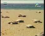 ساحل البيرو(الصحراء)