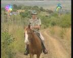 متابعة الحيوانات(حكايات الخيول)