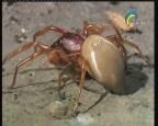 القوة العنكبوتية