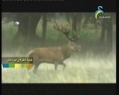 غابة الغزلان  (عالم الحيوان الغامض)