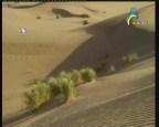 الصحراء (العين الشاهدة)