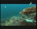 الجزيرة الغامضة 2 (ألغاز المحيطات)
