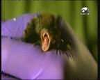 الزواحف الليلية (صدي الأرض)