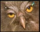 إضغط لمشاهدة ''الحياة الخفية  (عالم الحيوان الغامض) ''