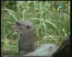 إضغط لمشاهدة ''ثعلب الماء 2 (عالم الحيوان الغامض) ''