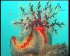 إضغط لمشاهدة ''الحلقة 1 (الحدائق البحرية) ''