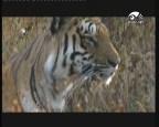 إضغط لمشاهدة ''في ظل الدبابات (غزو الطبيعة) ''