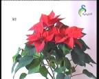 إضغط لمشاهدة ''نباتات (نباتات الزينة) ''