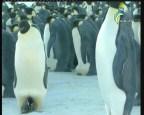 إضغط لمشاهدة ''الحيوانات البرمائية (العين الشاهدة) ''