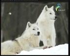 إضغط لمشاهدة ''المنطقة الجنوبية والجغرافية الطبيعية (أطلس العالم) ''