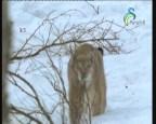 إضغط لمشاهدة ''دب جبال الانديز(حراس البيئة) ''
