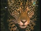 إضغط لمشاهدة ''اليغور الصياد ''