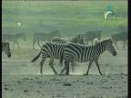 إضغط لمشاهدة ''الحلقة 1 (الحياة البرية في اسيا) ''