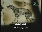 إضغط لمشاهدة ''الذئب الياباني (منقرضات معاصرة) ''