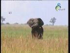إضغط لمشاهدة ''الحلقة 1 (موطن الفيلة) ''