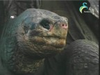 إضغط لمشاهدة ''الحلقة 31 (عالم الحيوان الغامض) ''