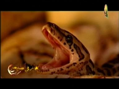 إضغط لمشاهدة ''الأفاعي (إعجاز في الطبيعة) ''