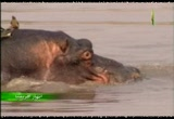 إضغط لمشاهدة ''3- نهر لونجوا (انهار افريقيا) ''