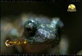 إضغط لمشاهدة ''الضفاضع (إعجاز في الطبيعة) ''