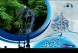 3- الشيخ سعد الغامدي (دعاء القنوت)