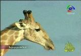 إضغط لمشاهدة ''17- نامبيا (محطات عالمية) ''