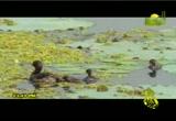إضغط لمشاهدة ''الدعاء القرآني 2 للشيخ يوسف معاطي ''