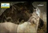 إضغط لمشاهدة ''الخيل في نواصيها الخير  ''
