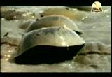 إضغط لمشاهدة ''5- حدائق البحر الأصفر (محميات طبيعية) ''