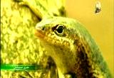 إضغط لمشاهدة ''4- جزيرة الطيور 2 (جزر سيشل) ''