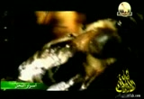 إضغط لمشاهدة ''الفيلم الوثائقي اسرار النحل ''