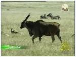 إضغط لمشاهدة ''9- الانظمة البيئية (العالم المثير) ''