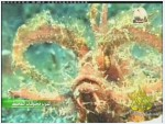 الفيلم الوثائقي اغرب مخلوقات المحيط