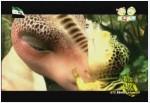 إضغط لمشاهدة ''الحلقة 6 (عالم الديناصورات) ''