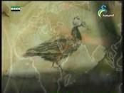 إضغط لمشاهدة ''الطرق علي باب المملكة(من براري الشرق) ''
