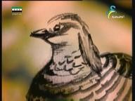 إضغط لمشاهدة ''النسور العملاقة 2 (عالم الحيوان الغامض) ''