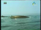 إضغط لمشاهدة ''الحياة قرب الماء (عالم الحيوان الغامض) ''