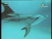 إضغط لمشاهدة ''أعاجيب حية(عالم الحيتان) ''