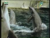 إضغط لمشاهدة ''السياحة في القارة القطبية(الجليد الحار) ''