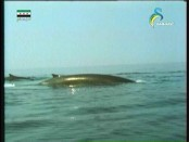إضغط لمشاهدة ''حول مالطة(ألغاز المحيطات) ''