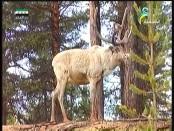 إضغط لمشاهدة ''الغابات الأمازونية(خط الإستواء) ''