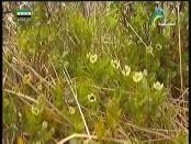 إضغط لمشاهدة ''حدائق كازورلا(المحميات الطبيعية) ''