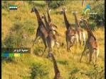 إضغط لمشاهدة ''حديقة جبال ماخينا(محميات طبيعية) ''