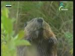 إضغط لمشاهدة ''الغوريلا المدنية(في حديقة الحيوان) ''