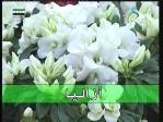 إضغط لمشاهدة ''الحلقة الاولي(نباتات الزينة) ''