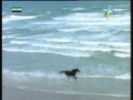 إضغط لمشاهدة ''محمية سينا جراي زباتا(في متنزهات الطبيعة)